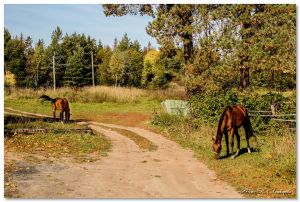 Осень в Дютькове - Строй-НЭСАБ - №9